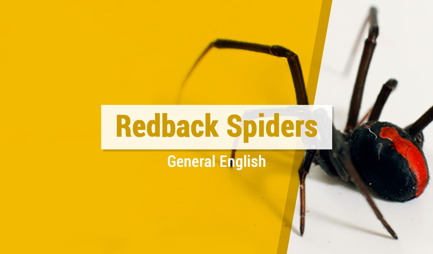 Course Image Redback Spiders