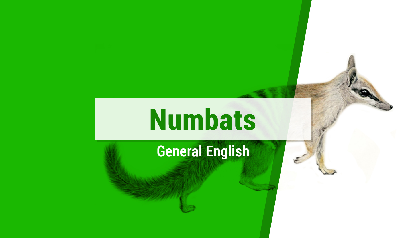 Course Image Numbats