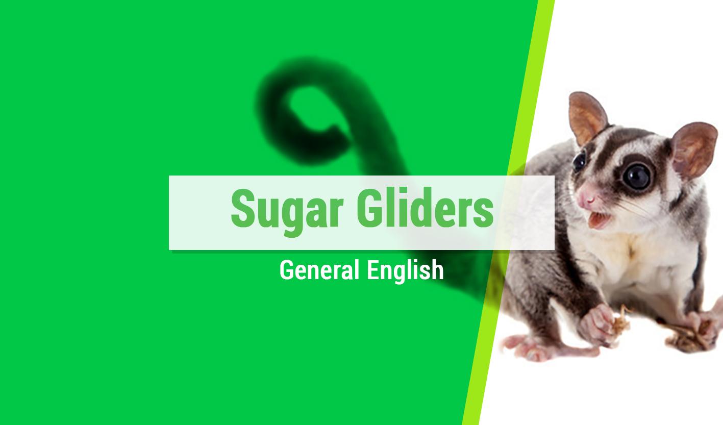 Course Image Sugar Gliders