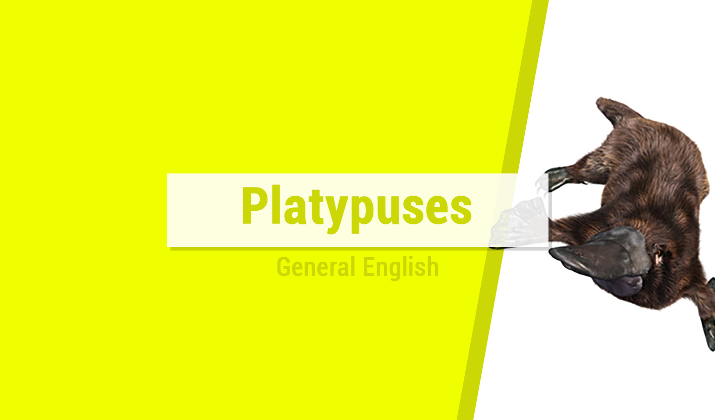 Course Image Platypuses